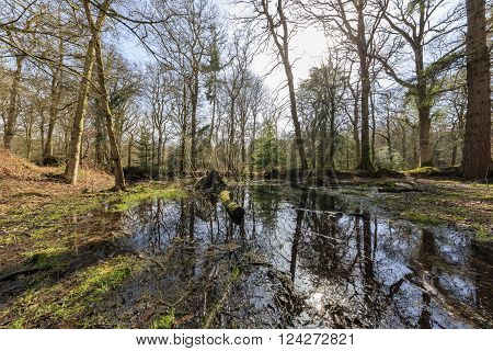Blackwater with good reflection at New Forest National Park UK