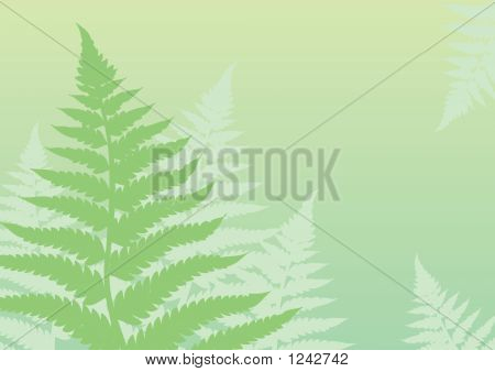 Green Fern Background