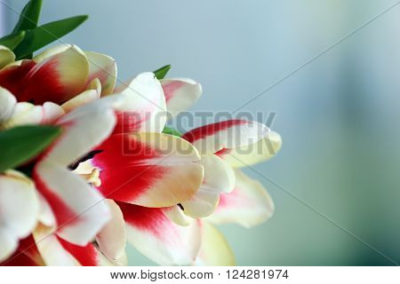 Bouquet of variegated tulips on blurred background, close up