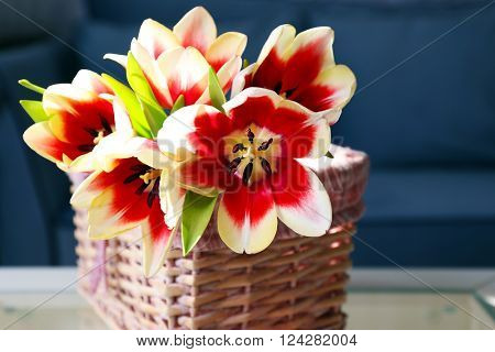 Bouquet of variegated tulips in basket on the table