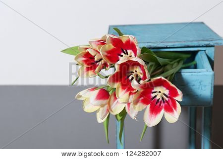 Bouquet of variegated tulips in drawer near striped wall