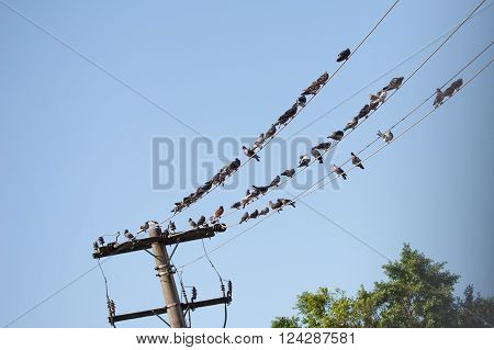 Pigeons resting on electrical wire with tree top