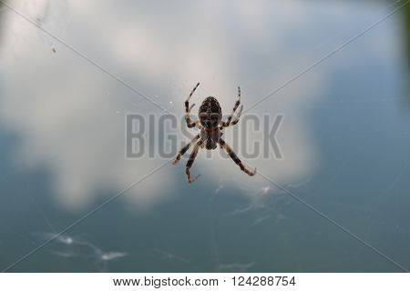 a spider in its network waiting for prey