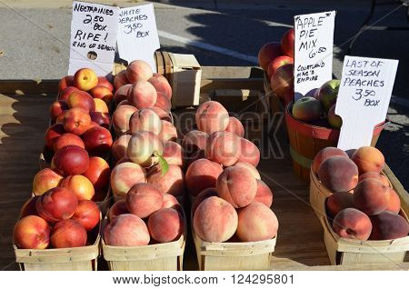 Nectarines and White Peaches and Apples displayed and for sale at a local outdoor farmers market on a sunny summer day