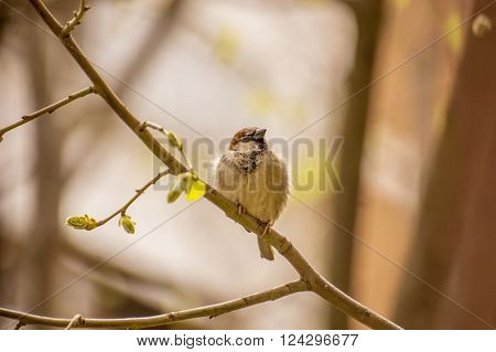 photo of house sparrow perched on a branch