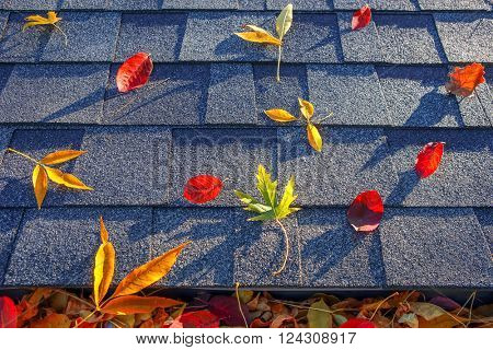 Colorful fall leaves in the gutter and on a roof