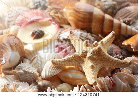 Sea shell background