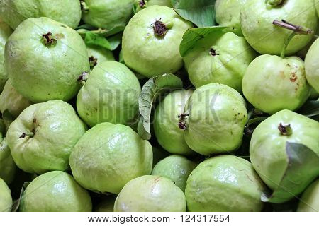 Cosed up Fresh Guava in Thai Local Market