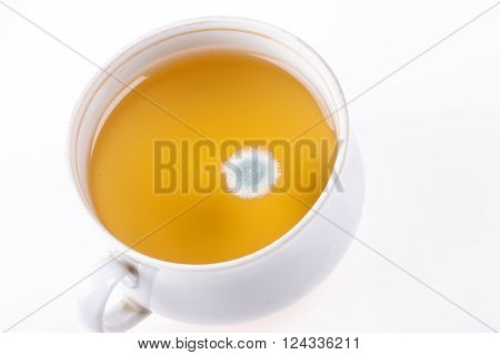 mold closeup in a Cup on white background