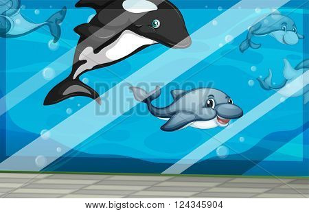 Dolphins swimming in the aquarium tank illustration