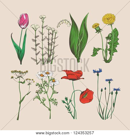 Vintage flowers and herbs. Vector hand drawn flowers and herbs illustration