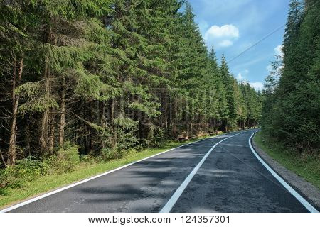 high road crosses the fir forest in Transylvania, Romania