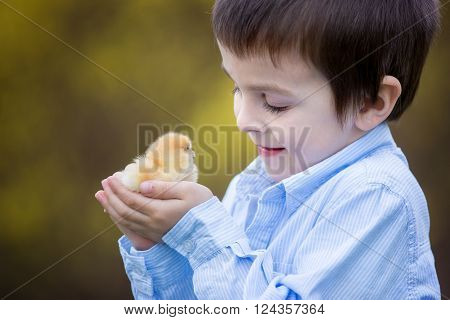 Little Chick In Child Hands