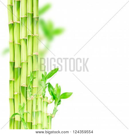 green bamboo stems and eaves  border isolated on white background