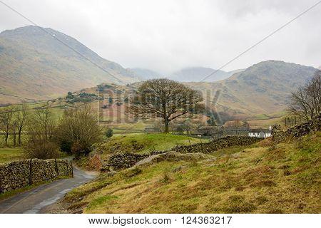 Oak Tree, Lake District