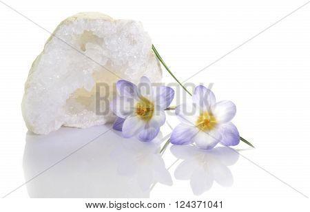Crocus Flower And Quartz Geode
