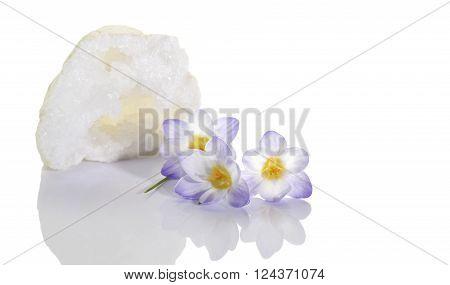 Crocus Flowers And Quartz Geode