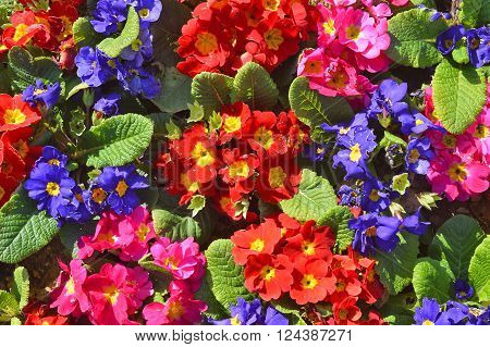 A Lovely Bunch of Dreamlike Flowers for You ** Note: Visible grain at 100%, best at smaller sizes