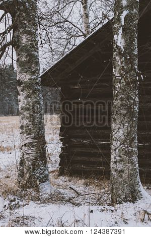 farm's country house among the birches in the snowy field