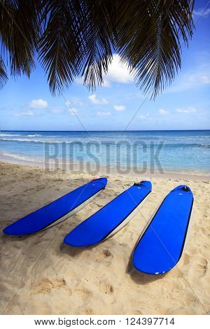 Surfboards at Dover beach on island Barbados on sandy shore by ocean
