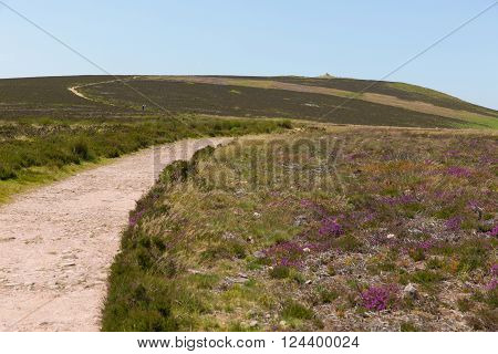 Walk to Dunkery Hill the highest point on Exmoor near to Minehead Somerset England UK in summer with wild pink flowers
