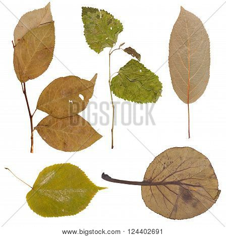 Pressed dried herbarium of various plants isolated
