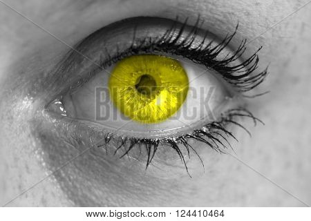 Eye with yellow iris looks at viewer concept macro.