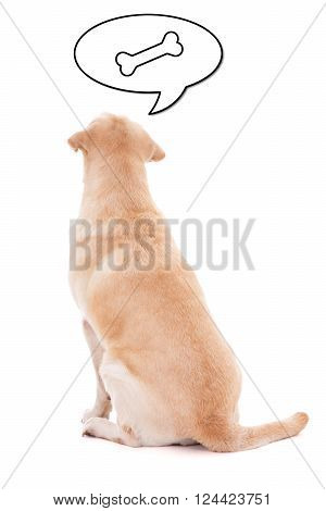 Back View Of Sitting Dog Thinking About Food Isolated On White