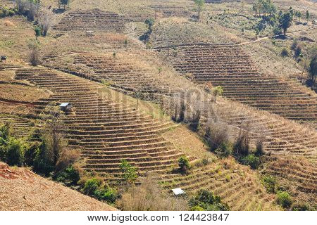 Barren Terraced Rice Field