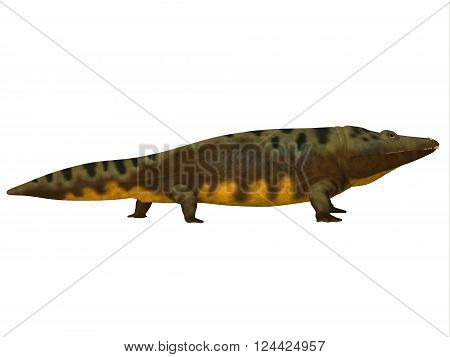 Mastodonsaurus Side Profile 3D illustration - Mastodonsaurus was an aquatic amphibian animal that lived in Europe during the Triassic Period.