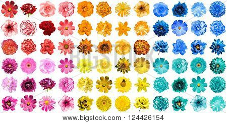 Mega Pack Of 72 In 1 Natural And Surreal Blue, Yellow, Red, Orange, Turquoise And Pink Flowers Isola