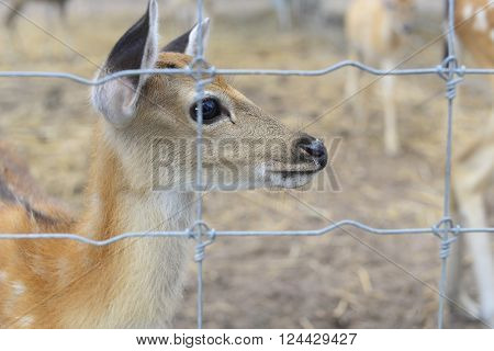 deer in prison soft focus blurry background.