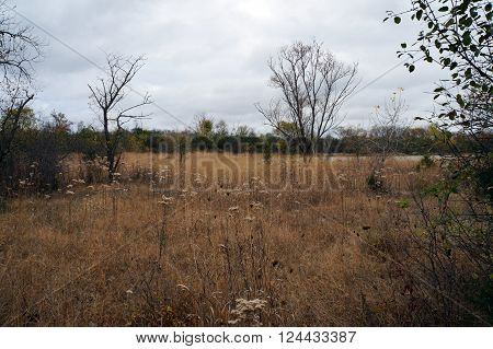 A meadow in the Lake Renwick Heron Rookery Nature Preserve in Plainfield, Illinois, during the autumn.