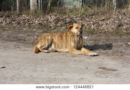 Cute yellow big dog behind fence photo.