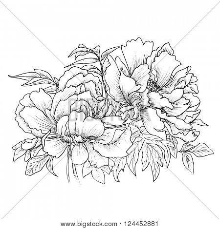 Beautiful hand drawn illustration of peony isolated on white background. Vector. Hand drawn artwork. Love concept for wedding invitations, cards, tickets, congratulations, branding, boutique logo