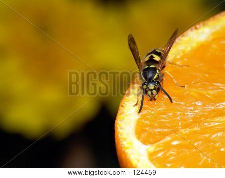 Orange Wasp