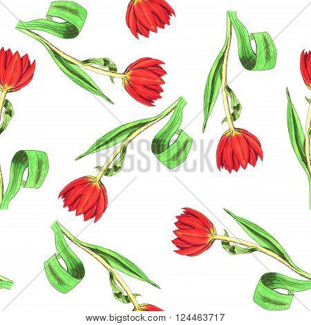 Seamless hand-drawn pattern with tulips, white background