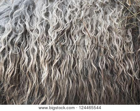 Soft, and fluffy sheepskin - wool. Closeup background