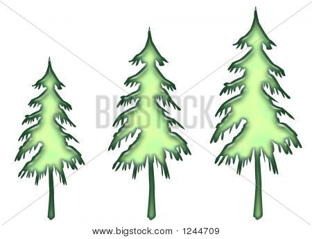 Ice Green Evergreens