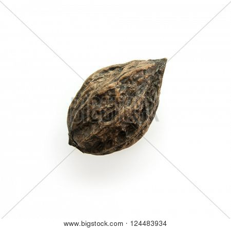 Walnut from Japanese walnut (Juglans mandshurica var. sachalinensis) tree, commonly known as Oni-gurumi, isolated on white. Naturally grows in forests. A walnut species native to Japan and Sakhalin.