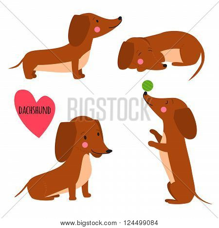 Cute dachshund. Set of dachshund illustration in different poses. Funny dachshund vector illustration. Portrait of a dog for decoration and design