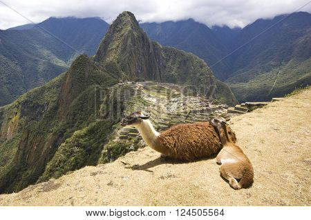 portrait of two lying lamas, mother and child, near old town of machu-picchu, peru, with surrounding mountains