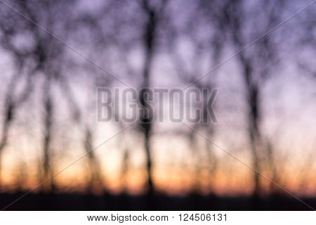 Blurred twilight in the wood trees silhouettes on sunset