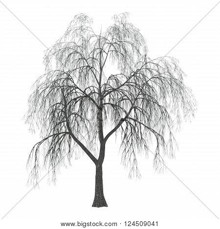 3D Illustration Willow On White