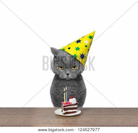 Cat celebrating birthday with piece of cake -- isolated on white background
