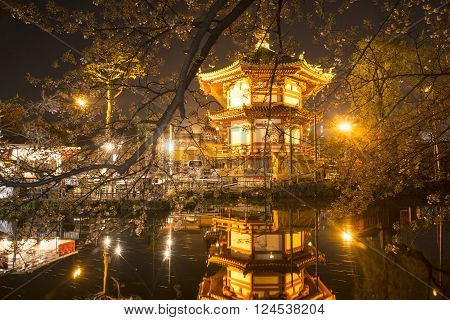 Nigth beautiful Cherry Trees in Blossom and pagoda gold in a Garden during Springtime of japan