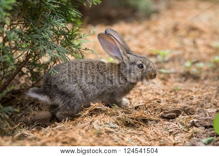 Cute easter rabbit hiding in wild nature