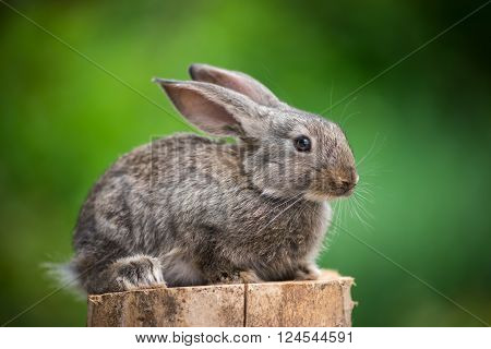 Beautiful easter rabbit baby bunny agaist green bokeh background.