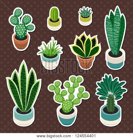 Set of cactuses and succulents in pots. Cactuses and succulents isolated on a brown background. Indoor plants in a flat style. Set of stickers indoor plants in pots. Vector illustration.