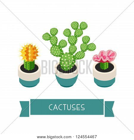 Cactuses in pots. Cactuses isolated on white background. Indoor plants in a flat style. Natural background with three cacti. Vector illustration.